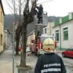 LKW fährt gegen Baum