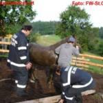 Pferd in Jauchengrube