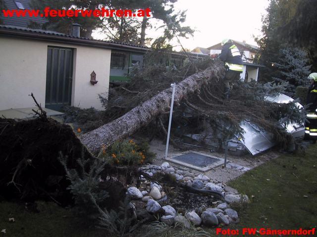 Baum nach Sturm auf Schwimbad