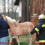 Einsatzübung Brand mit verletzten Pferden