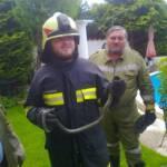 Ringelnatter im Garten - Feuerwehr fing diese ein