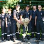 Tierrettung in Eibiswald – Feuerwehr fängt Schaf