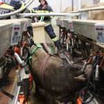 Tierrettung in Liezen