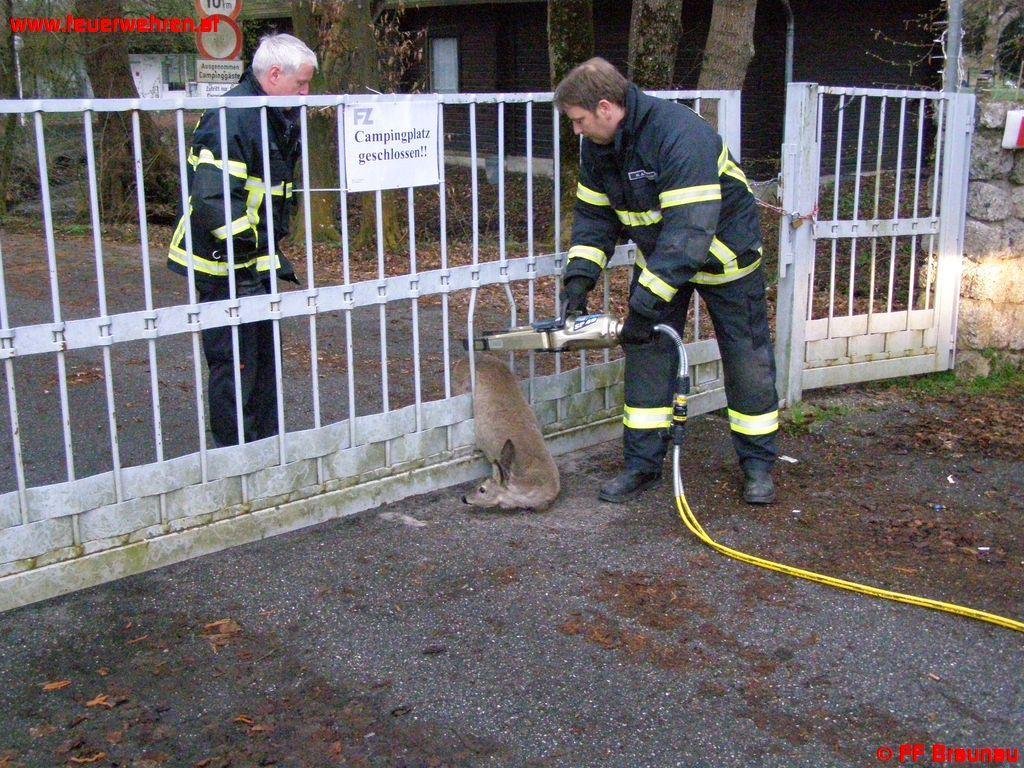 Tierrettung in Braunau