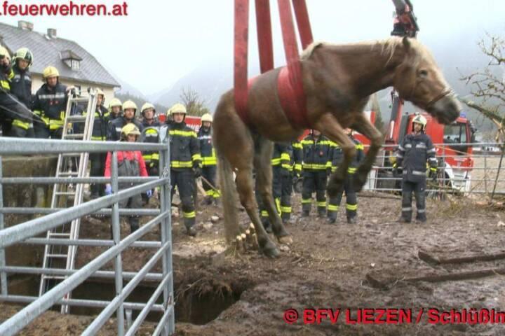 Pferd in Jauchengrube 1