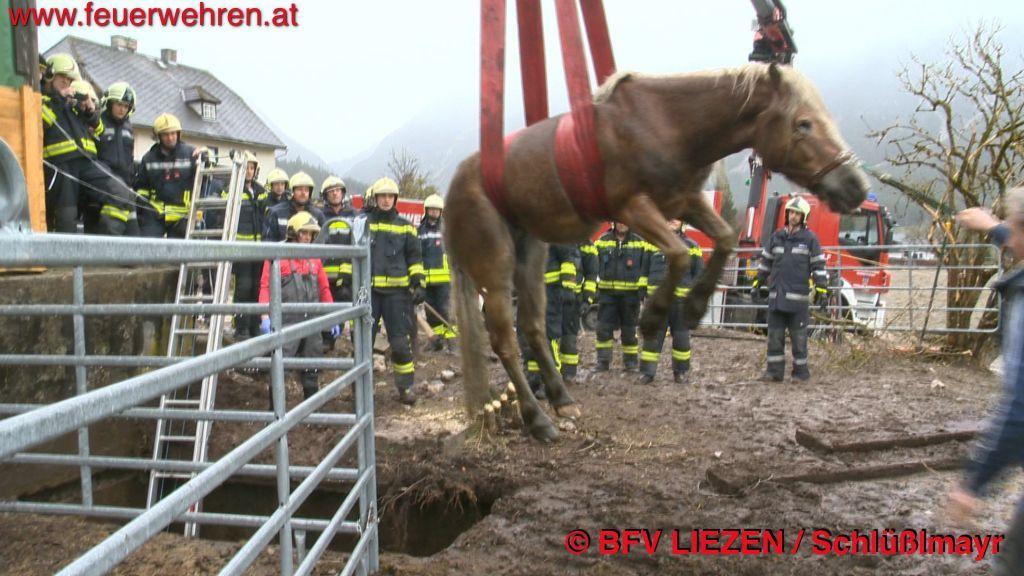 BFV Liezen (Gröbming): Feuerwehr rettet Pferd aus Jauchengrube 1