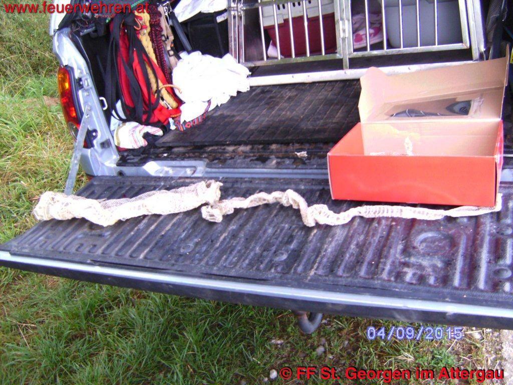 FF St. Georgen i.A.: Fund Schlangenhaut Abgottschlange (Boa Constrictor) 1