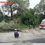 FF Pettendorf: Unwettereinsatz und Sturmschaden 2