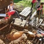 BFK Jennersdorf: Tödlicher Arbeitsunfall in Weichselbaum 2