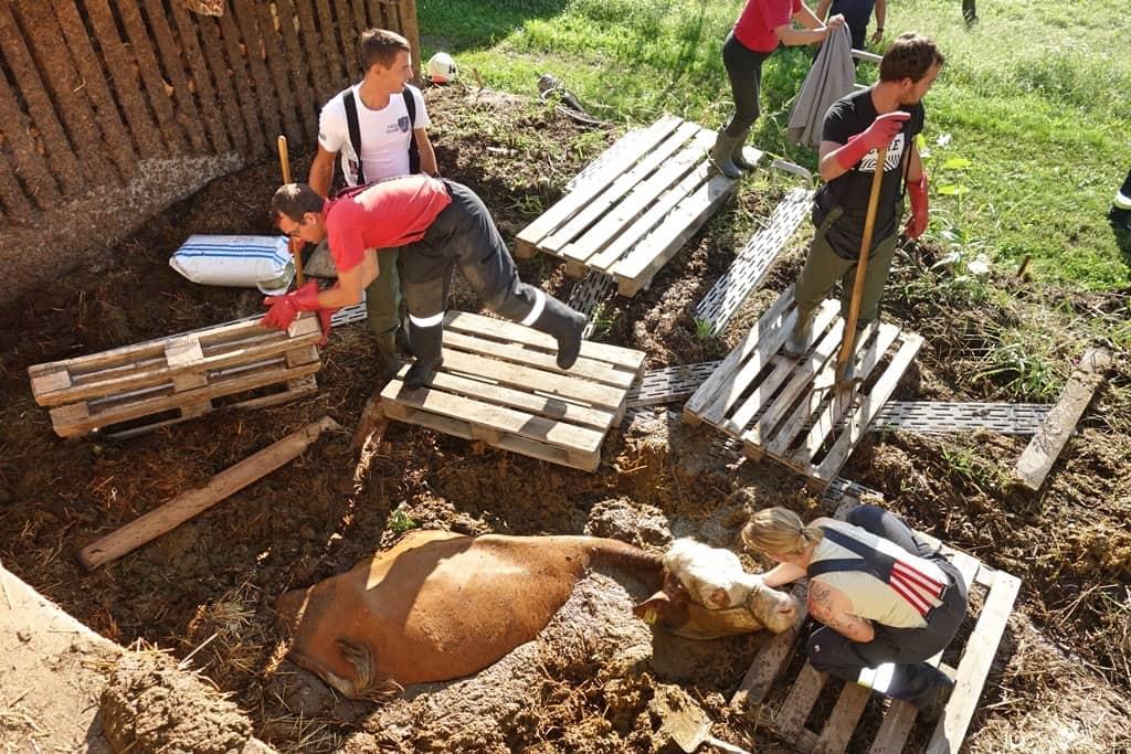 FF Steinberg-Rohrbach: Kuh in Misthaufen versunken 1