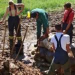 FF Steinberg-Rohrbach: Kuh in Misthaufen versunken 9