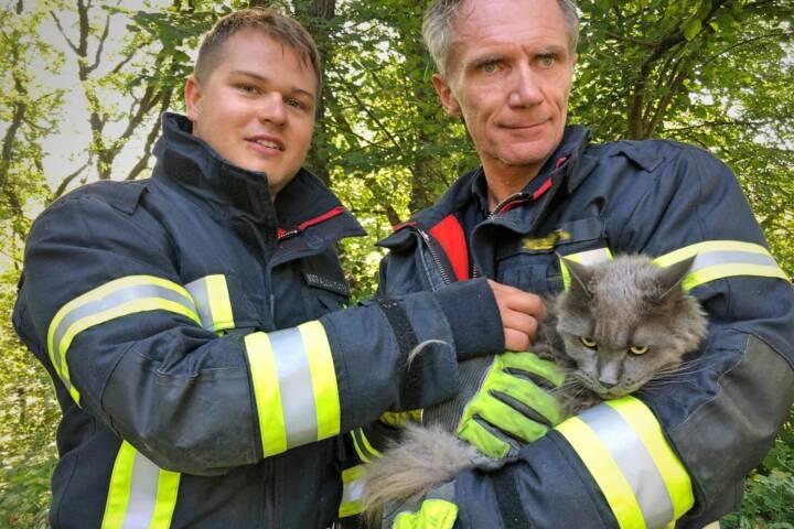 Am 15.August 2019 wurde die FF Klosterneuburg zu einer Tierrettung (Katze am Baum) in die Egon Schiele-Gasse alarmiert