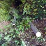 Baum über der B26 zwischen Stixenstein und Puchberg