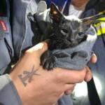 Katze aus Kanal gerettet