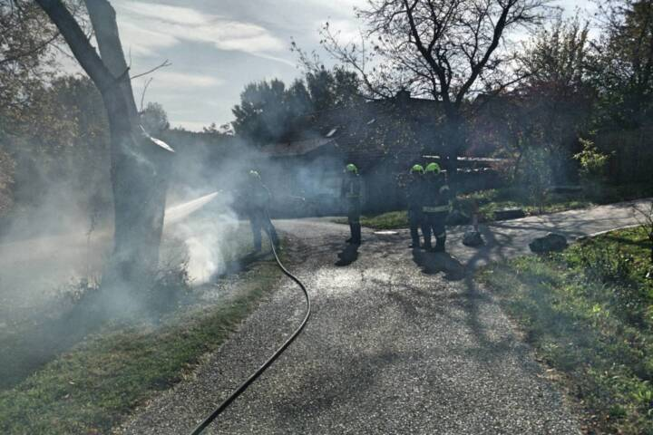 Brand eines Baumes
