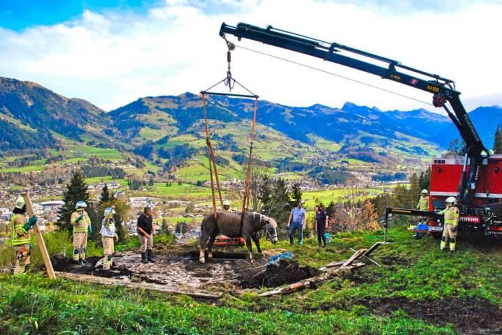 Pferd in Jauchengrube gestürzt
