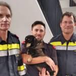 Dame und Hund aus Aufzug befreit