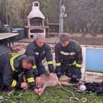 Feuerwehr rettet Rehe aus Pool und Garten in Wiener Neudorf