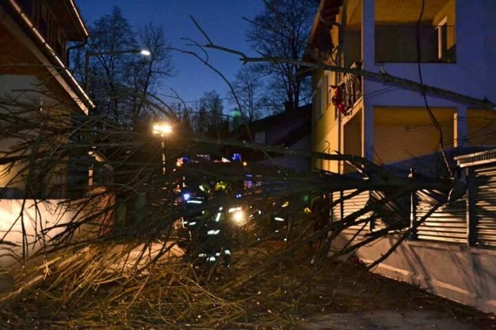 Sturmschaden - Baum in Stromleitung