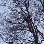Katze sitzt in ca. 12 Meter Höhe fest