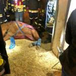 Pferd in Notlage