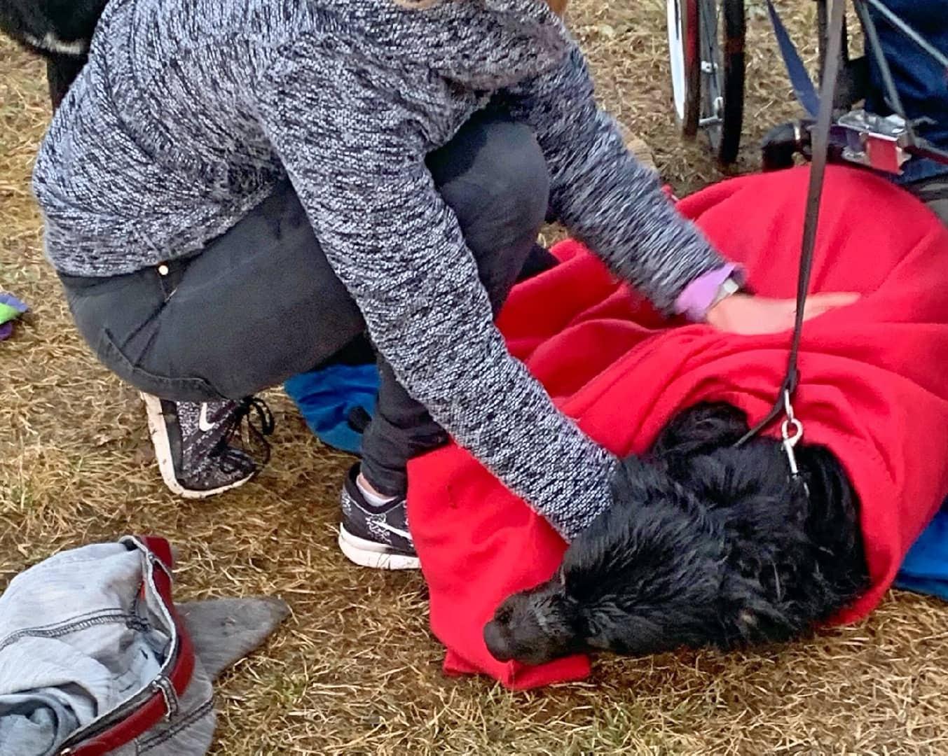 Hundehalterin aus Silbersee gerettet