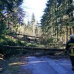 Sturmtief Sabine sorgt für Reihe von Feuerwehreinsätzen