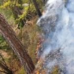 Waldbrand in Wielfresen
