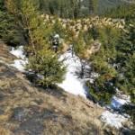 Waldbrand auf der Hochalm - Ausbreitung konnte verhindert werden
