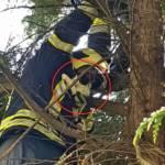 Feuerwehr rettet Katze vom Baum