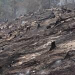 Waldbrand in Leppen, Gemeinde Bad Eisenkappel