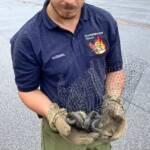 Tierische Einsätze für die Hauptfeuerwache