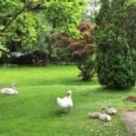 Zwei tierische Einsätze in Villach