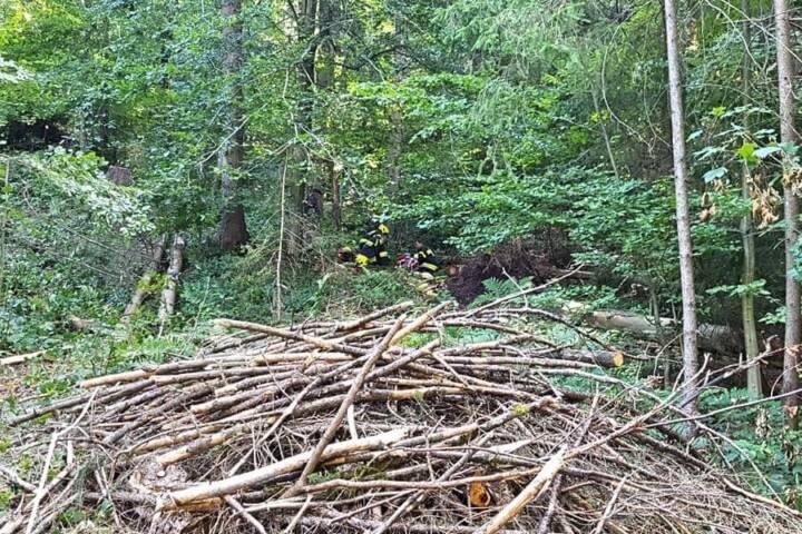 Forstarbeiter von Baumwipfel getroffen und verletzt