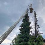 Baumbrand in einer Wohnsiedlung