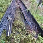 Beginnender Waldbrand am Pleschutz