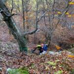 Personenrettung durch Feuerwehr aus Waldstück