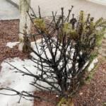 Abgebrannter Christbaum in der Innenstadt