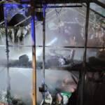 Brand eines Gewächshauses