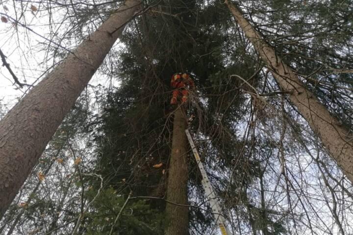 Katze von 30 Meter hohem Baum gerettet