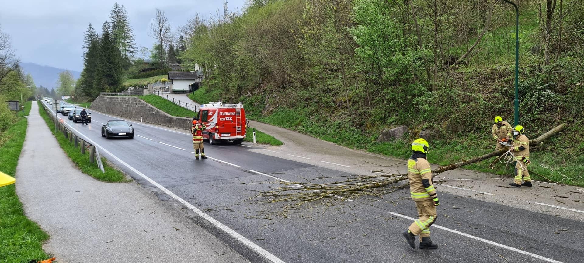 Baum drohte auf B145 zu stürzen