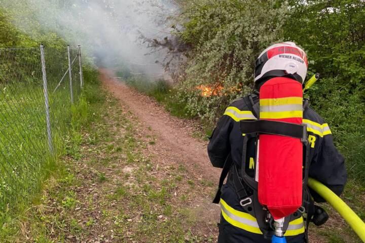 Erneuter Flurbrand am Figurteich