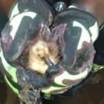 Rettung einer Entenfamilie