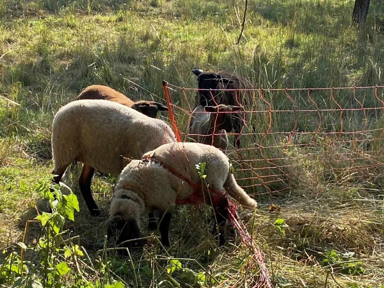 Tierrettung in Mogersdorf