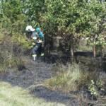 Windschutzgürtel in Flammen