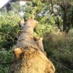 Sturmtief über Haschendorf